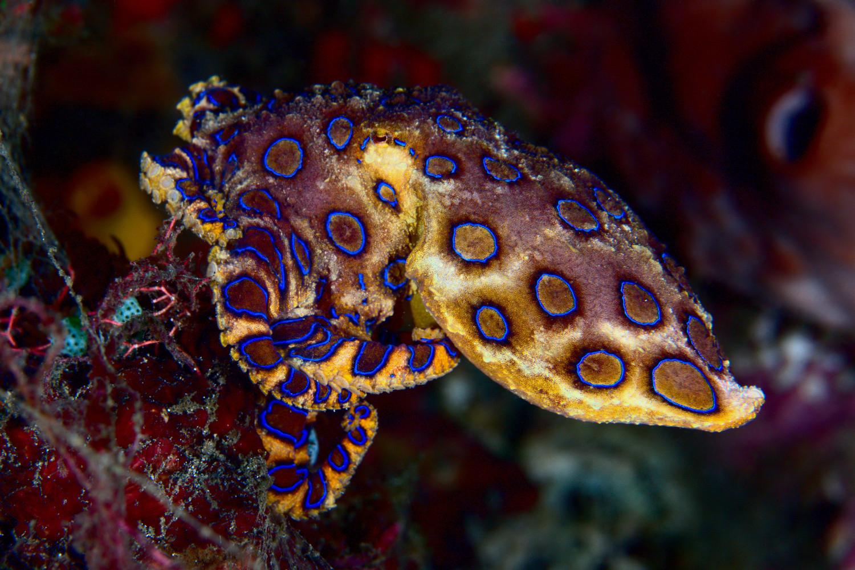 Guy Holding Blue Ringed Octopus